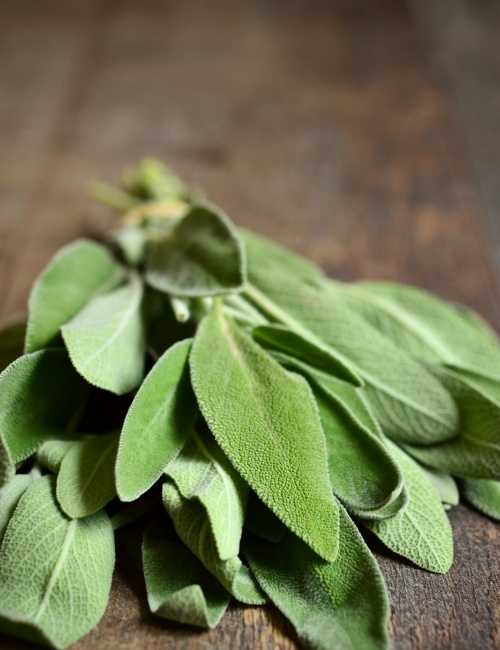Bunch of fresh organic sage.