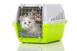 Zwei Katzen in Transportbox