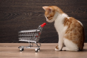 Grocery supermarket trolley and kitten. Concept - pet products, supermarket or Internet service