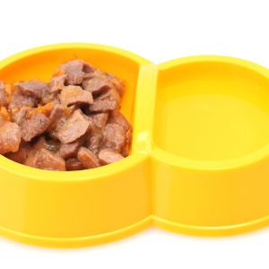 yellow bowl with cat food and water isolated on white