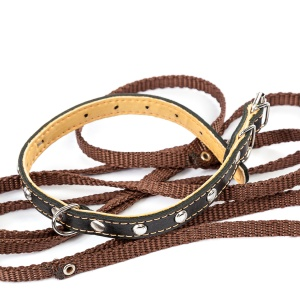 Leather dog collar and leash on a white background.